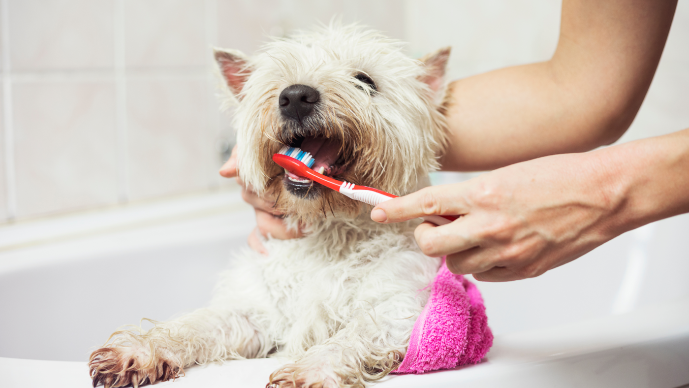 Tips to Practice Healthy Hygiene With Your Pets